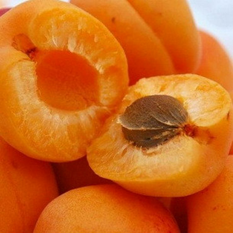 Bild 13: Apfel Aprikose Pfirsich Zwetschge Birne Kirsche