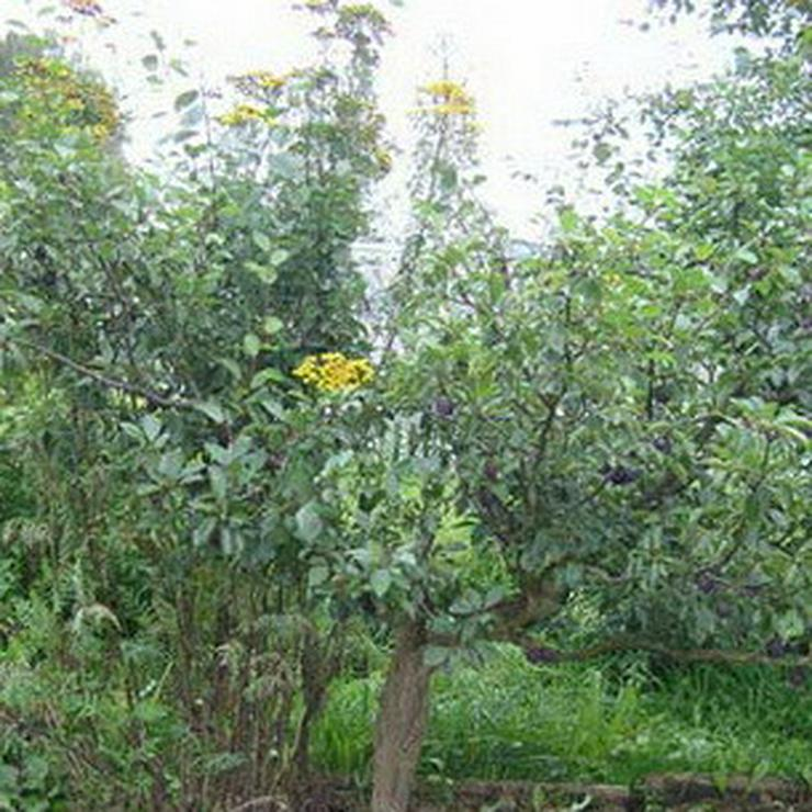 Bild 7: Apfel Aprikose Pfirsich Zwetschge Birne Kirsche