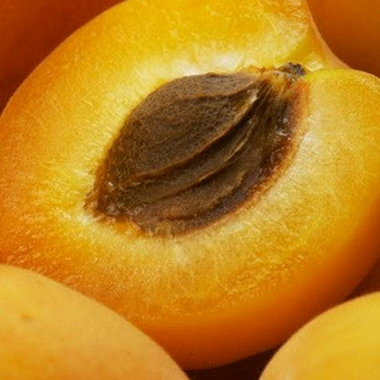 Bild 9: Apfel Aprikose Pfirsich Zwetschge Birne Kirsche