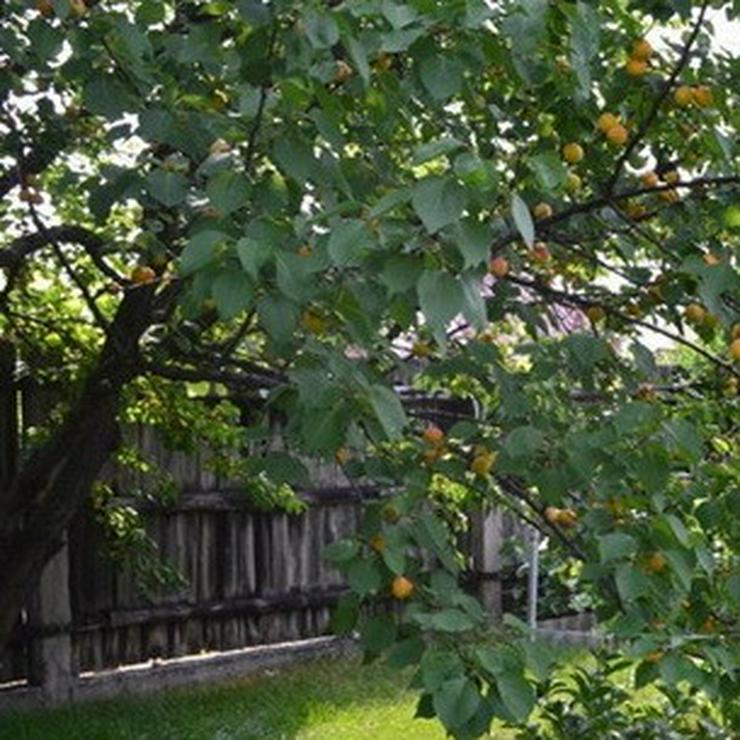 Bild 10: Apfel Aprikose Pfirsich Zwetschge Birne Kirsche