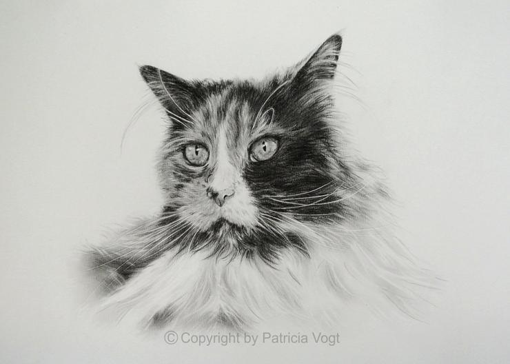 Portrait von Ihrem Tier nach Foto in Bleistift
