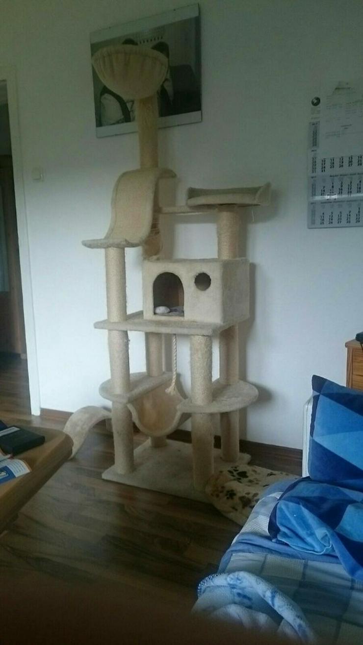 Bild 2: 2 Katzen mit Kratzbaum und Transportbox