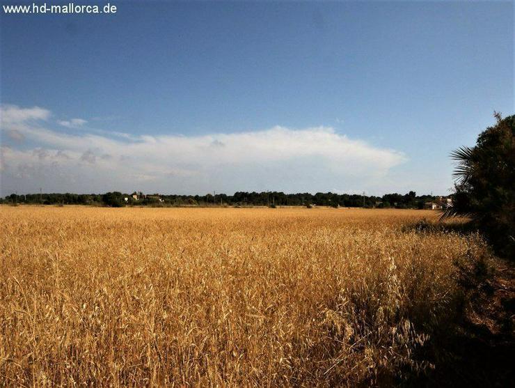 Grundstueck in 07639 - Sa Rapita - Grundstück kaufen - Bild 1