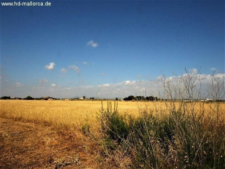 Bild 2: Grundstueck in 07639 - Sa Rapita