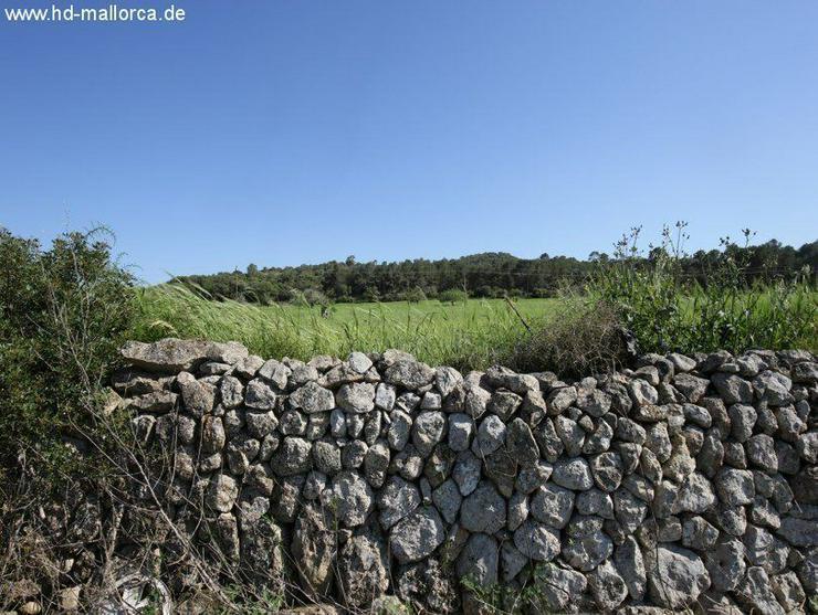 Grundstueck in 07550 - Son Servera - Bild 1