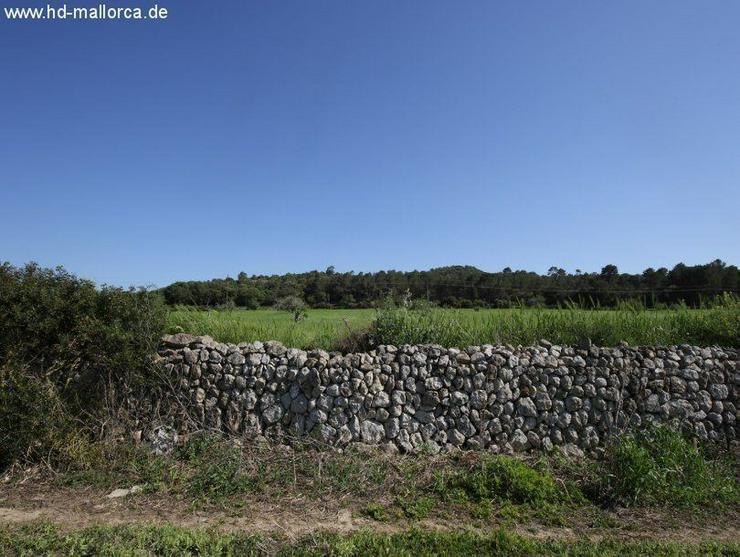 Bild 2: Grundstueck in 07550 - Son Servera