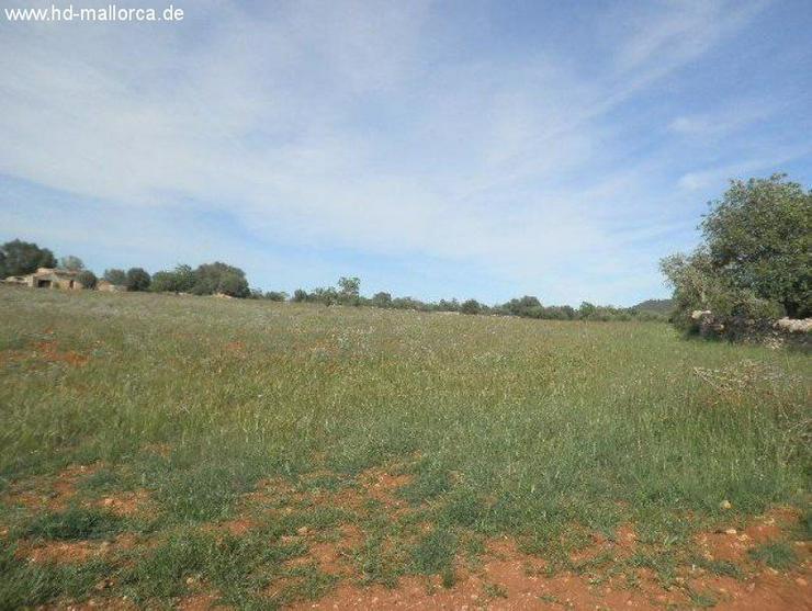 Bild 2: Grundstueck in 07650 - Santanyi