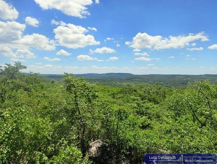 Bild 5: Großes Grundstück mit schöner Aussicht