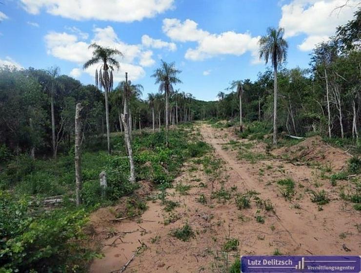 Bild 4: Großes Grundstück mit schöner Aussicht