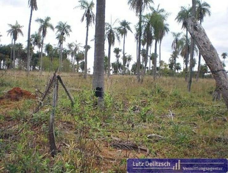 Bild 3: Grundstück in Piribebuy