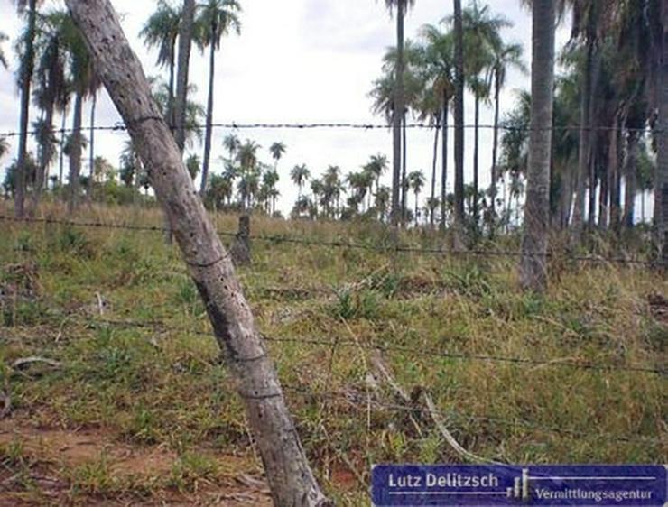 Grundstück in Piribebuy - Grundstück kaufen - Bild 1