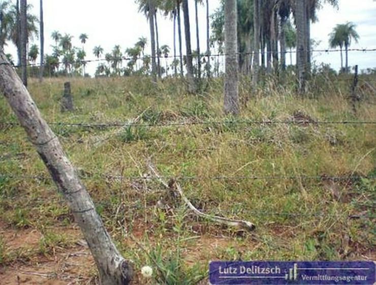Bild 2: Grundstück in Piribebuy