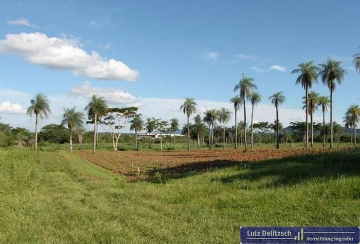 Bild 2: Haus mit großem Grundstück in Carapegua