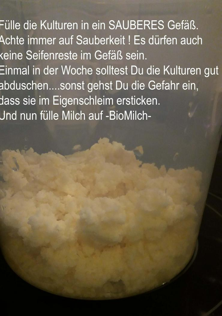 Bild 2: Milchkefir-Knollen