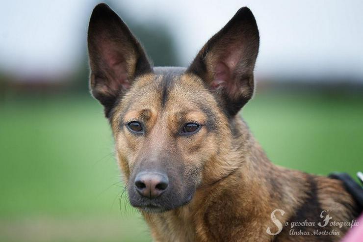YODA möchte endlich ankommen - Mischlingshunde - Bild 1