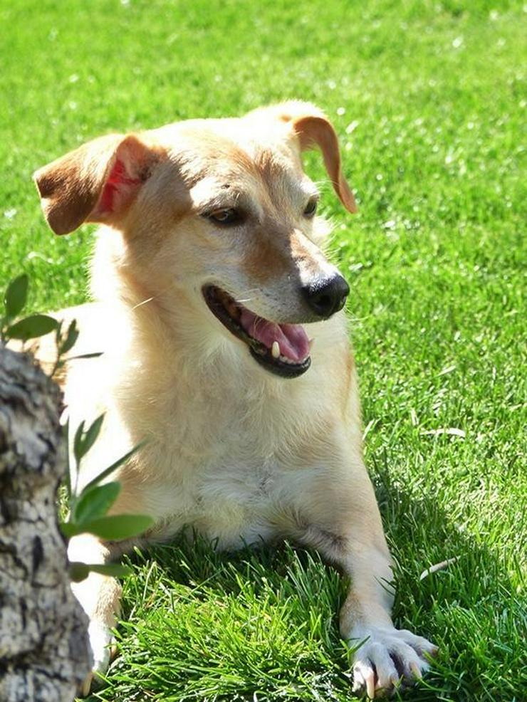 GIOIA - Rolli-Hund - Mischlingshunde - Bild 1