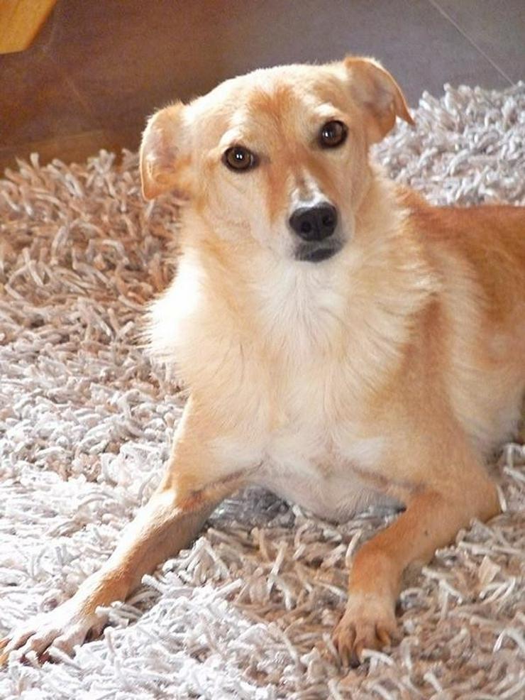 Bild 4: GIOIA - Rolli-Hund