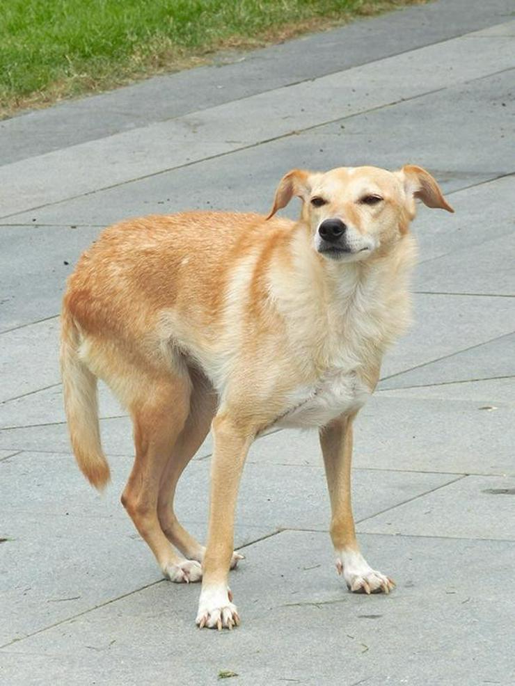 Bild 5: GIOIA - Rolli-Hund