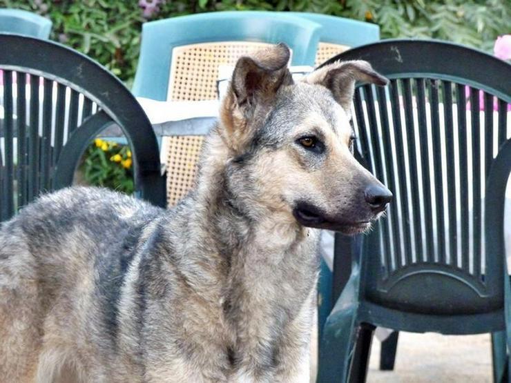 IDA sucht einen Landsitz - Mischlingshunde - Bild 1