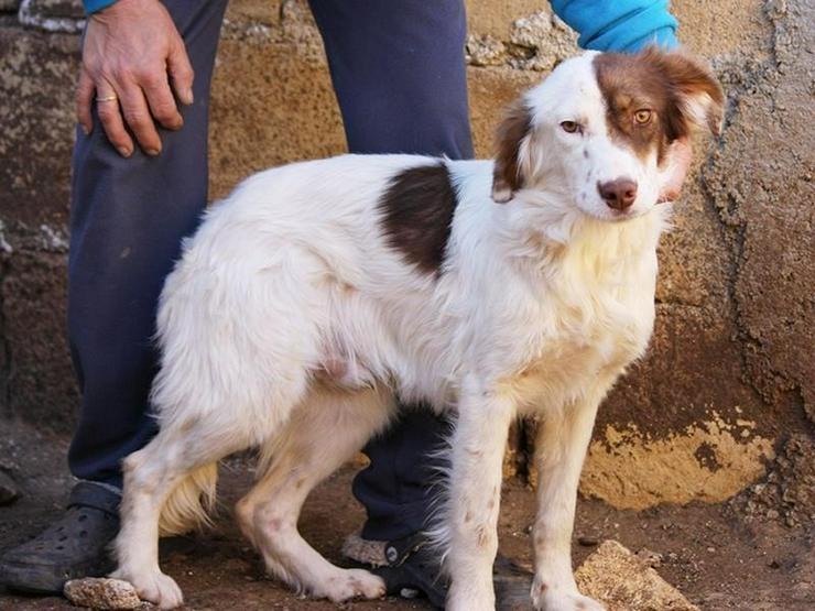 KRÜMEL sucht seine Familie - Mischlingshunde - Bild 1