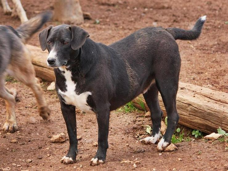 ADIL- ein ganz besonderer Hund