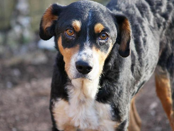 TRICO ist ein ganz Hübscher - Mischlingshunde - Bild 1