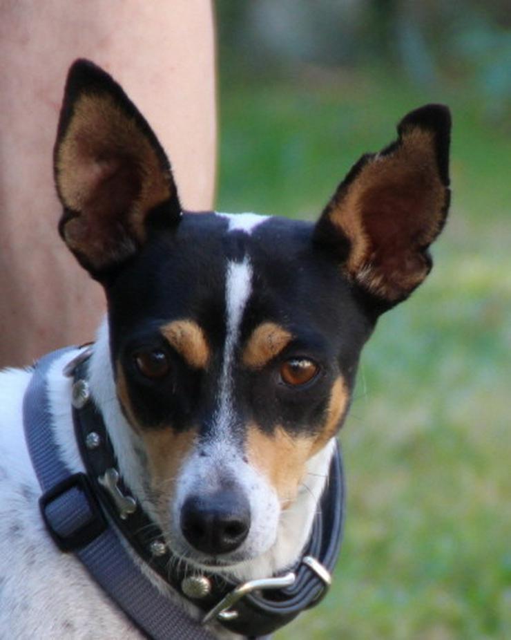 Hannah, eine lustige, kleine Hündin - Mischlingshunde - Bild 1