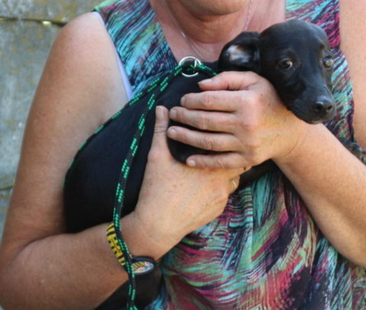 Maisy sucht Familienanschluss! - Mischlingshunde - Bild 1
