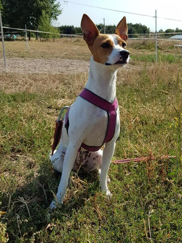 Süsse Fiby sucht Ihr sportliches Zuhause - Mischlingshunde - Bild 1