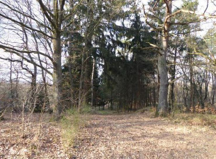 PROVISIONSFREI! Waldgrundstück (ca. 1.453 m²) in Schönenberg-Kübelberg/Landkreis Kusel