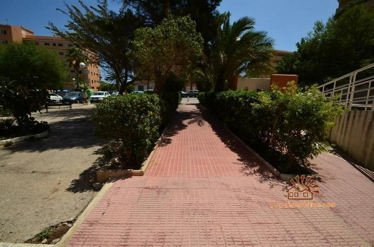 Bild 5: Apartment mit 1 Schlafzimmer in Pinomar-Guardamar/Alicante