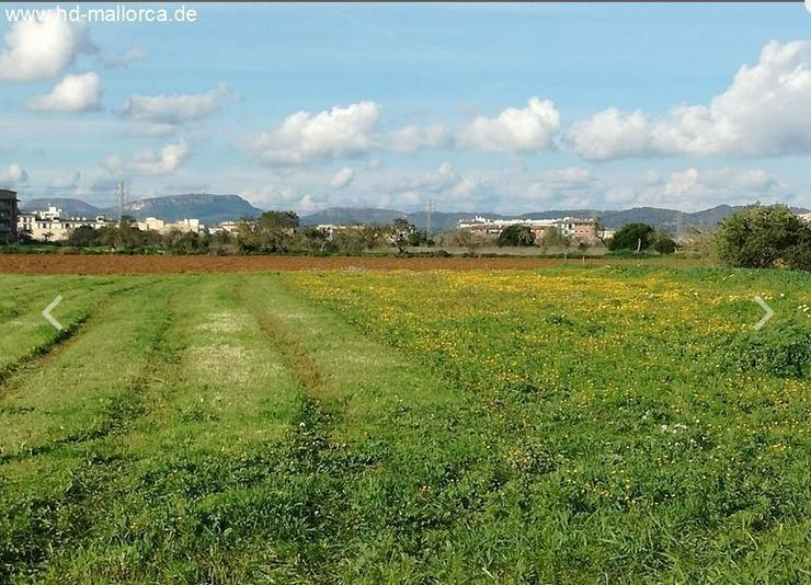: Grundstück 18000 m² mit genehmigtem Bauprojekt in ruhiger Zone von Campos - Grundstück kaufen - Bild 1
