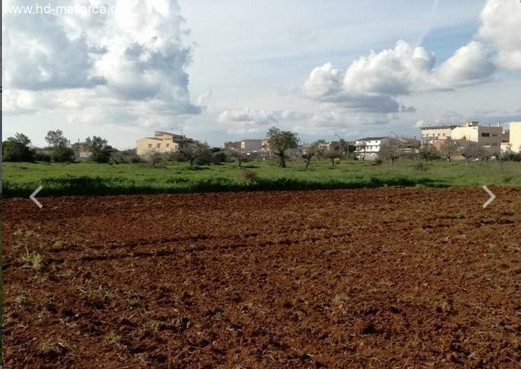 Bild 5: : Grundstück 18000 m² mit genehmigtem Bauprojekt in ruhiger Zone von Campos