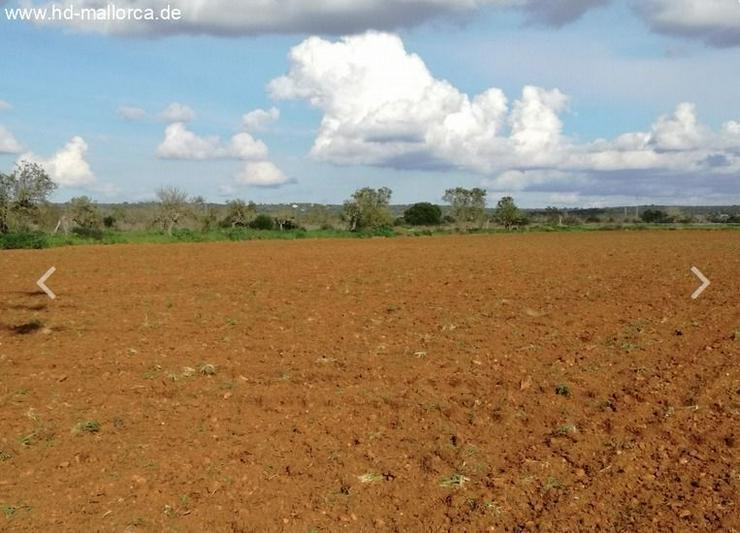 Bild 4: : Grundstück 18000 m² mit genehmigtem Bauprojekt in ruhiger Zone von Campos
