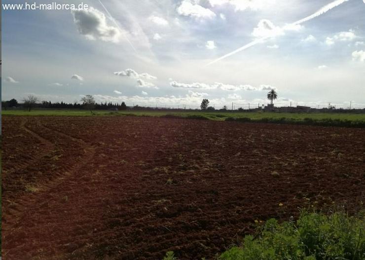 Bild 6: : Grundstück 18000 m² mit genehmigtem Bauprojekt in ruhiger Zone von Campos