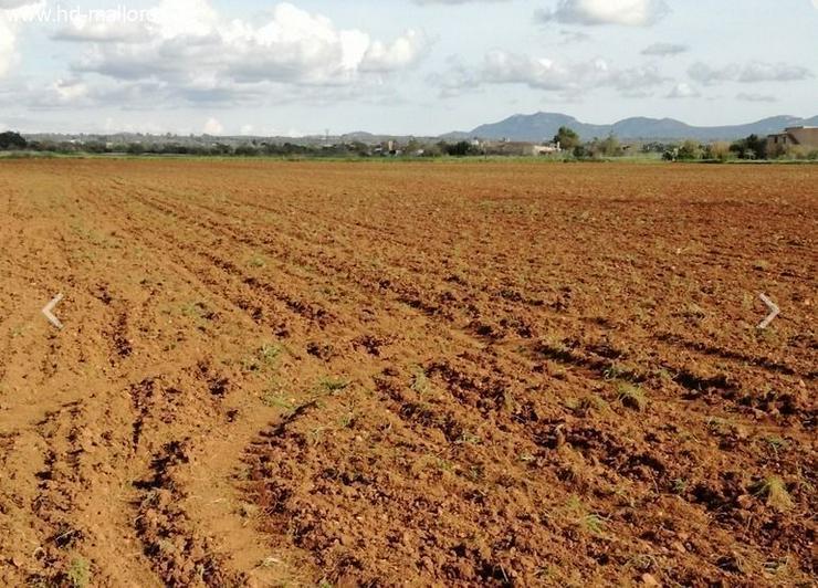 Bild 2: : Grundstück 18000 m² mit genehmigtem Bauprojekt in ruhiger Zone von Campos