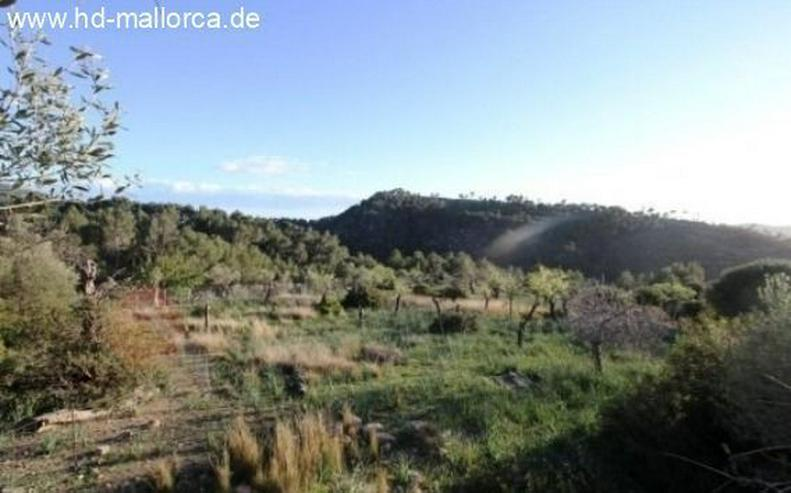 Bild 2: : Berg-Grundstück in den Bergen von Andratx