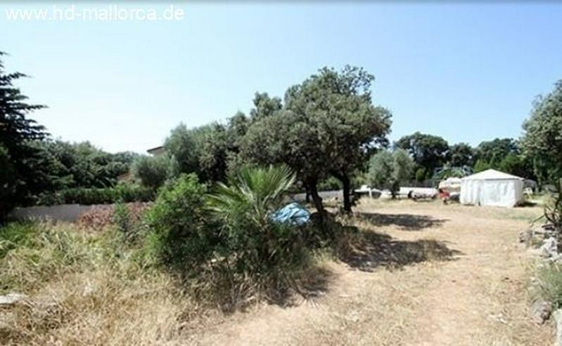 Bild 4: : Bauruine in guter Lage in Alcudia