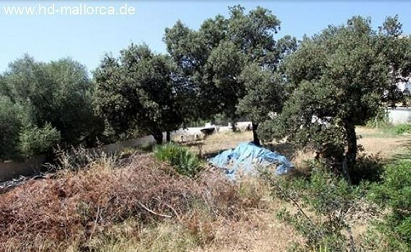 Bild 6: : Bauruine in guter Lage in Alcudia