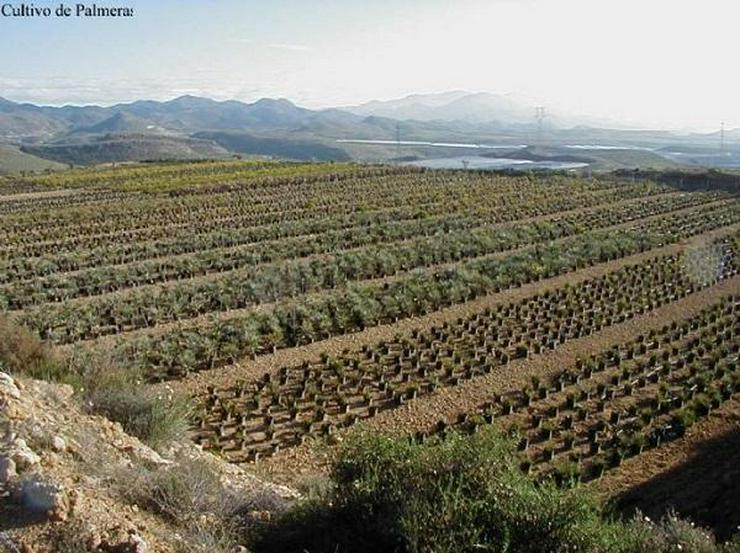 IL Privatverkauf Finca Venta de Pobre (Andalusien Spanien)