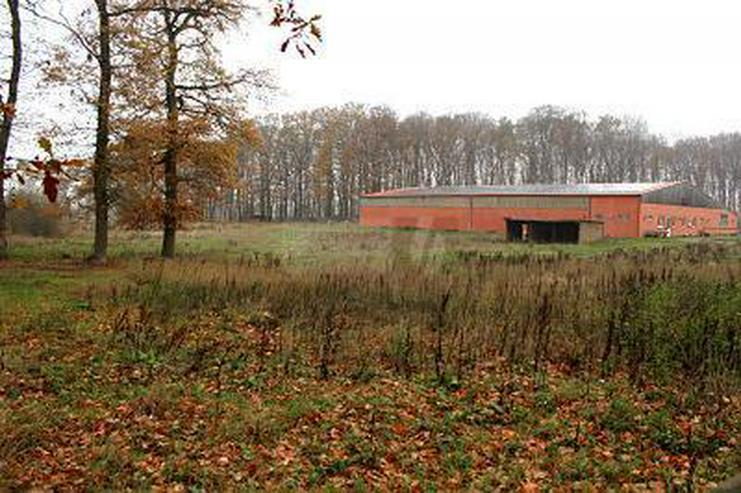 Bild 2: PROVISIONSFREI - 1.500M² GEWERBE-/ REITHALLE + BAUPLÄTZE