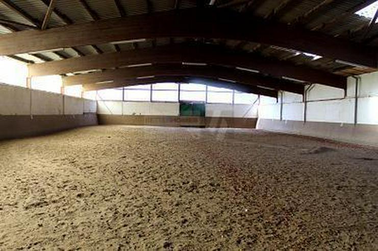 Bild 4: PROVISIONSFREI - 1.500M² GEWERBE-/ REITHALLE + BAUPLÄTZE