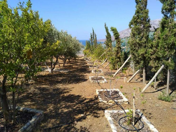 Bild 9: Steinhaus in Tsoutsouros Süd Kreta 180qm Wohnfläche 3650qm Grundstück