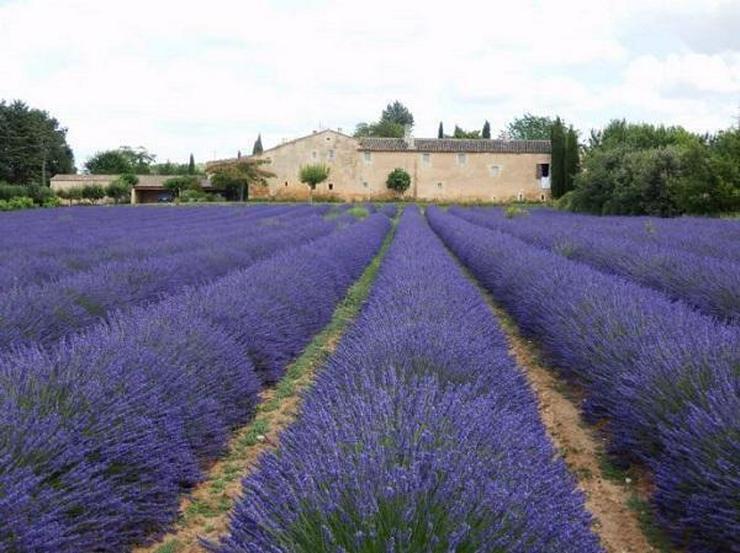 IL Privatverkauf Bauernhaus in Goult (Provence-Alpes-Côte d?Azur Frankreich)