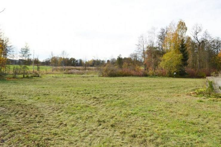 Bild 3: Unterstellmöglichkeit für 3 Pferde mit 3400 m² Weide bei 84335 Mitterskirchen