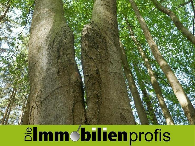 3 Hektar Waldgrundstück Nahe Lichtenberg