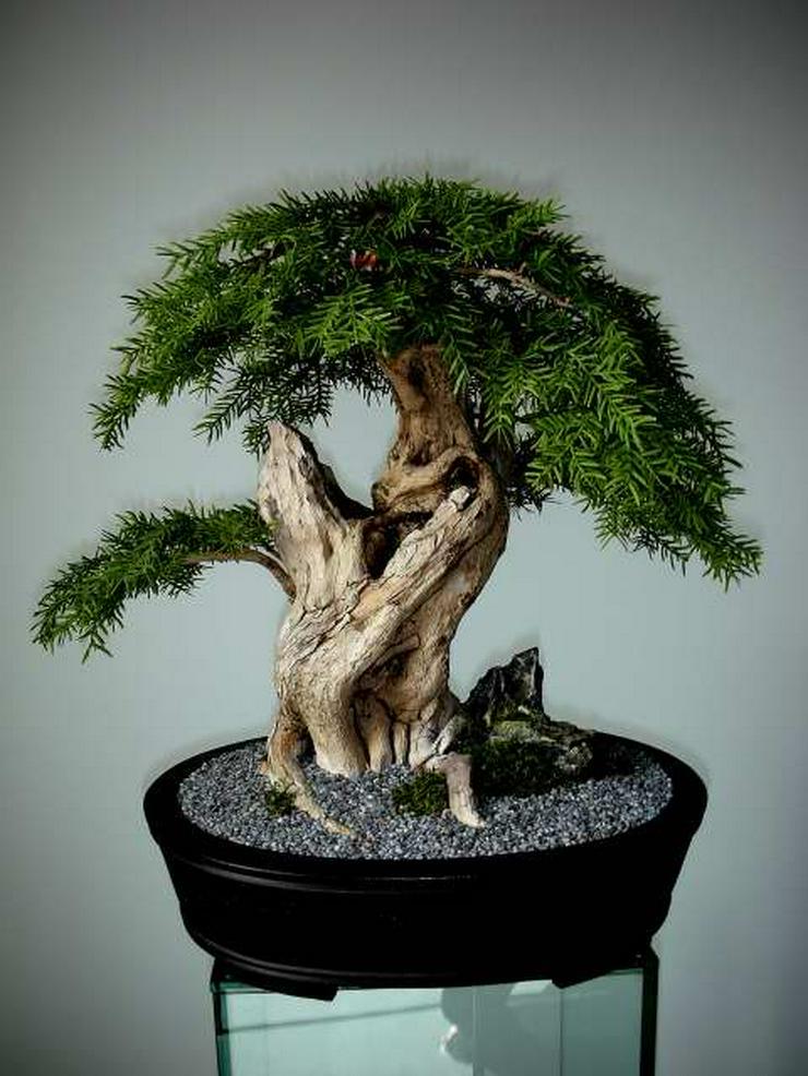 Bild 2: Ein Leben ohne Bonsai ist zwar möglich, aber sinnlos!