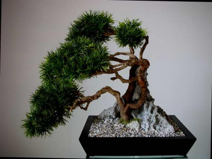 Bild 4: Ein Leben ohne Bonsai ist zwar möglich, aber sinnlos!