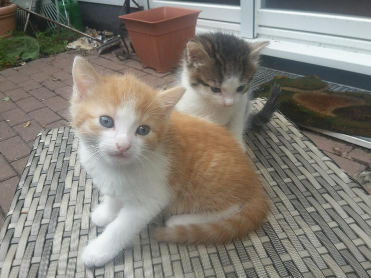 Bild 2: Süße kleine Kätzchen abzugeben