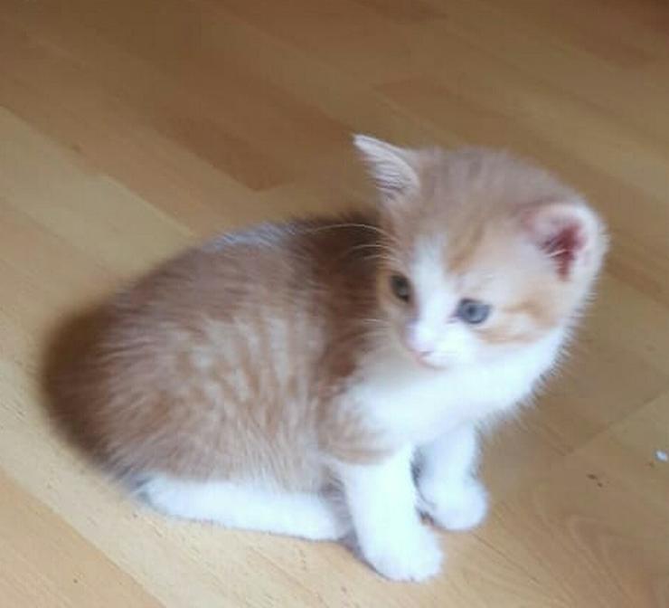 Süße kleine Kätzchen abzugeben - Mischlingskatzen - Bild 1